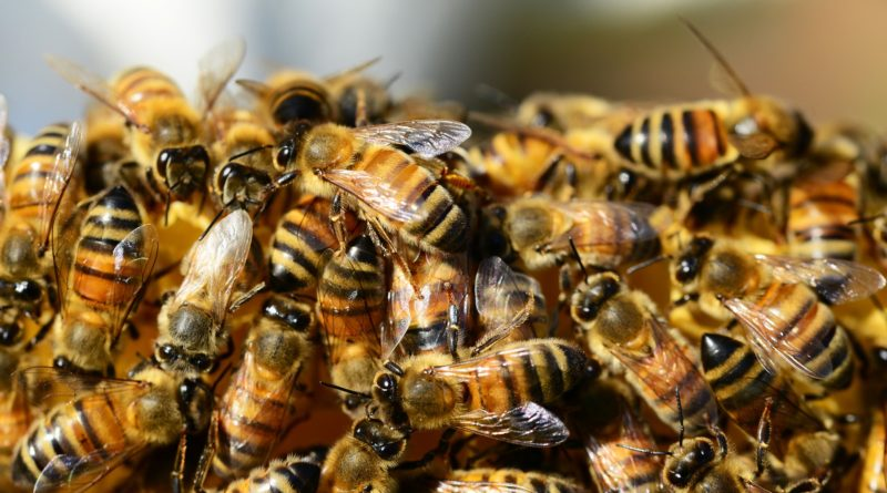A Swarm of Bees - A Collective AI?